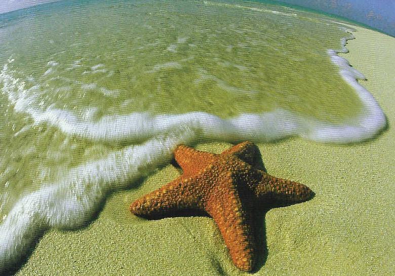 Starfish11